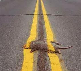 A photo of roadkill, painted over with yellow road lines.