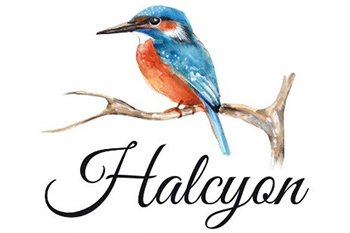 a colored illustration of a kingfisher aka the halcyon bird