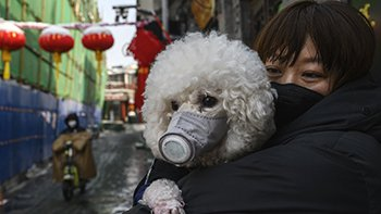 image of a woman wearing a fask mask holding a dog wearing a fask mask