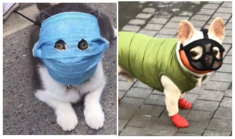 image of a dog wearing a fask mask and a cat wearing a face mask